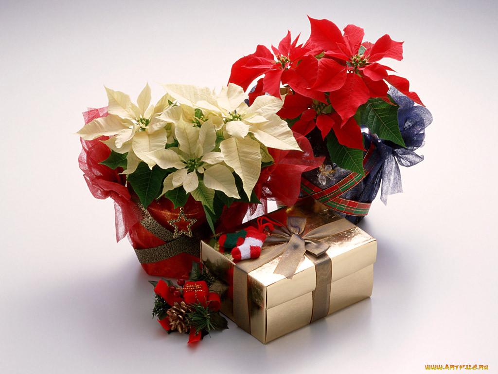 Подарок для любимой жены фото хочется